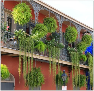 Ferns-in-New-Orleans-French-Quarter-Balconies