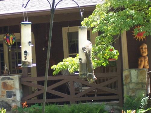 Snow Bird Lodge 021