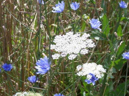 Wildflower Walk 2014 034