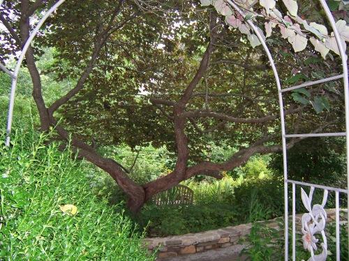 Arboretum 2013 013