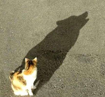 catwolfshadow