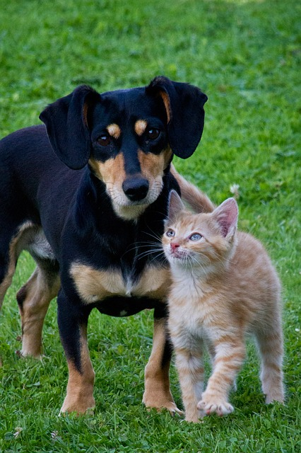 cat-dog-animals-pets-garden-friends-lovely