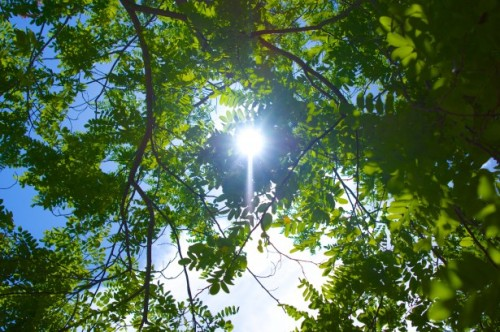 sun-through-tree-leaves
